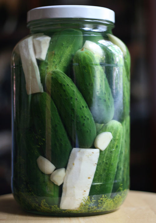 gallon jar of cucumbers in brine