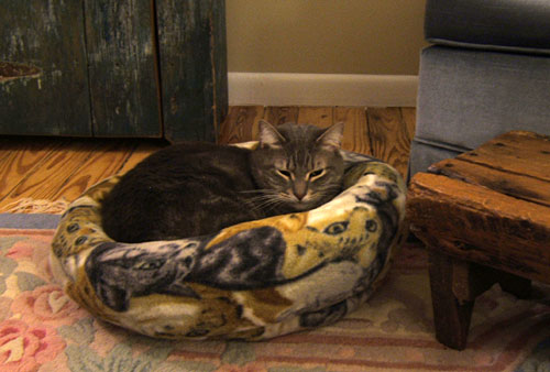 Trooper in his cat bed